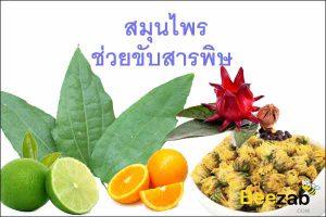 สมุนไพรขับพิษ สมุนไพรช่วยขับสารพิษ สมุนไพร สมุนไพรไทย