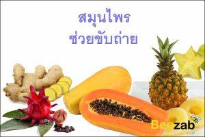 สมุนไพรเป็นยาระบาย สมุนไพรช่วยขับถ่าย สมุนไพรไทย สมุนไพร