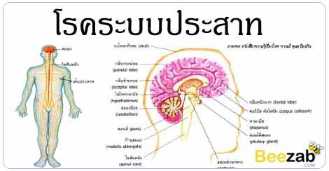 โรคระบบประสาท โรคการควบคุมร่างกาย โรคไม่ติดต่อ