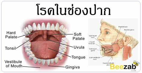 โรคในช่องปาก โรคเหงือก โรคฟัน โรคเกี่ยวกับฟัน