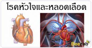 โรคหัวใจ โรคหลอดเลือด โรคหัวใจและหลอดเลือด โรคไม่ติดต่อ