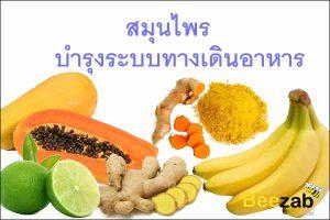 สมุนไพรบำรุงทางเดินอาหาร สมุนไพรรักษาโรคทางเดินอาหาร สมุนไพร สมุนไพรไทย