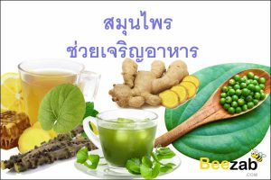 สมุนไพรช่วยเจริญอาหาร สมุนไพรกระตุ้นการกินอาหาร สมุนไพร สมุนไพรแก้เบื่ออาหาร