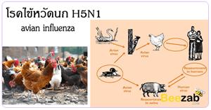 ไข้หวัดนก H5N1 โรคติดต่อ โรคระบาด