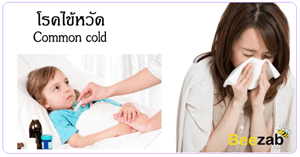 ไข้หวัด โรคติดต่อ โรคติดเชื้อ ติดเชื้อไวรัส