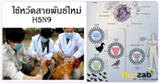 ไข้หวัดมรณะ หวัดสายพันธ์ใหม่ H5N9 โรคติดต่อ