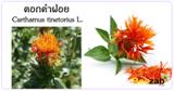 ดอกคำฝอย ต้นคำฝอย สมุนไพร ประโยชน์ของดอกคำฝอย