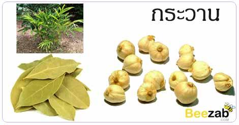 กระวาน ใบกระวาน สมุนไพร สมุนไพรไทย