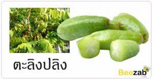 ตะลิงปลิง ผลไม้ สมุนไพร สรรพคุณของตะลิงปลิง