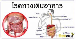 โรคทางเดินอาหาร โรคลำไส้ โรคในช่องท้อง