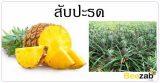 ต้นสับปะรด สมุนไพร ผลไม้ สรรพคุณของสับปะรด