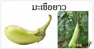 มะเขือยาว สมุนไพร สรรพคุณของมะเขือยาว