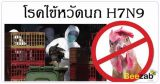 ไข้หวัดนก H7N9 โรคติดต่อ โรคทางเดินหายใจ