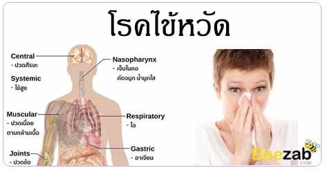 โรคหวัด ติดเชื้อที่ทางเดินหายใจ โรคติตต่อ โรคทางเดินหายใจ