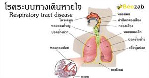 โรคระบบทางเดินหายใจ โรคปอด ความผิดปรกติกระบบการหายใจ การรักษาโรค