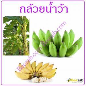 กล้วยน้ำว้า สมุนไพร สมุนไพรไทย สรรพคุณของกล้วย
