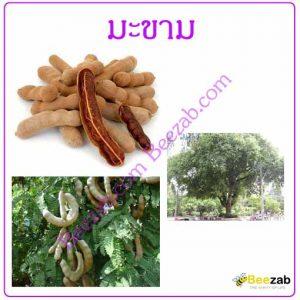 มะขาม สมุนไพร สมุนไพรไทย สรรพคุณของมะขาม