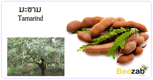 มะขาม สมุนไพร สรรพคุณของมะขาม ประโยชน์ของมะขาม