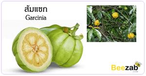 ส้มแขก สมุนไพร สรรพคุณของส้มแขก ประโยชน์ของส้มแขก