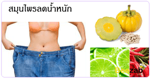 สมุนไพรลดน้ำหนัก สมุนไพรลดความอ้วน ลดน้ำหนัก ลดความอ้วน