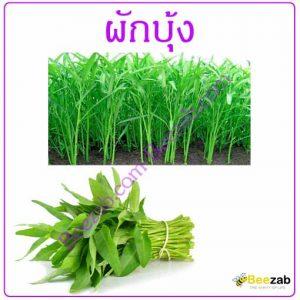 ผักบุ้ง ต้นผักบุ้ง สมุนไพร สรรพคุณของผักบุ้ง