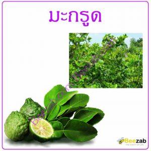 มะกรูด ต้นมะกรูด สรรพคุณของมะกรูด สมุนไพร