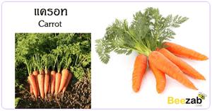 แครอท สมุนไพร สรรพคุณของแครอท ประโยชน์ของแครอท