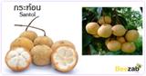 กระท้อน สมุนไพร ผลไม้ สรรพคุณของกระท้อน