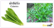 ผักชีฝรั่ง สมุนไพร พืชสวนครัว ประโยชน์ของผักชีฝรั่ง
