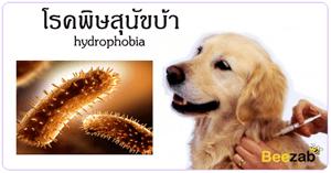 โรคพิษสุนัขบ้า โรคกลัวน้ำ โรคติดต่อ โรคติดเชื้อ