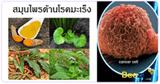 สมุนไพรป้องกันมะเร็ง สมุนไพร สมุนไพรไทย