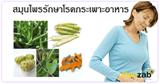 สมุนไพรบำรุงทางเดินอาหาร สมุนไพร สมุนไพรไทย