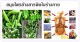 สมุนไพรล้างสารพิษ สมุนไพร สมุนไพรไทย