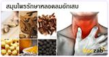 สมุนไพรรักษาหลอดลมอักเสบ สมุนไพร สมุนไพรไทย