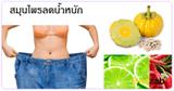 สมุนไพรลดน้ำหนัก สมุนไพรลดความอ้วน สมุนไพร สมุนไพรไทย
