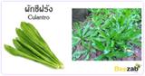 ผักชีฝรั่ง สมุนไพร สมุนไพรไทย สรรพคุณของผักชีฝรั่ง
