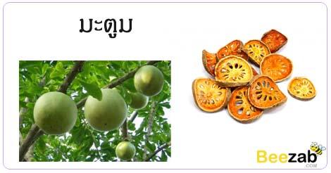 มะตูม ต้นมะตูม สรรพคุณของมะตูม ประโยชน์ของมะตูม