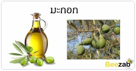 มะกอก สรรพคุณของมะกอก น้ำมันมะกอก โทษของมะกอก
