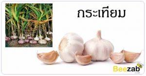 กระเทียม สมุนไพร สรรพคุณของกระเทียม สมุนไพรไทย