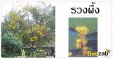 ต้นไม้ประจำร10 ต้นรวงผึ้ง ต้นไม้มงคล ไม้หอม