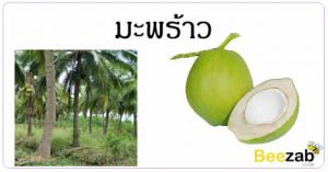 สรรพคุณของมะพร้าว สมุนไพร สมุนไพรไทย ต้นมะพร้าว