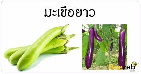 มะเขือยาว ผัดสวนครัว สมุนไพร สรรพคุณของมะเขือยาว