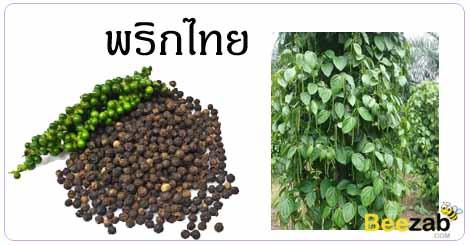 พริกไทย สรรพคุณของพริกไทย สมุนไพร สมุนไพรไทย
