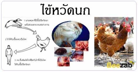 ไข้หวัดนก โรคติดต่อ โรคติดเชื้อ โรคทางเดินหายใจ