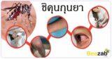 ชิคุนกุนยา ไข้ปวดข้อ โรคติดต่อ โรคจากยุง