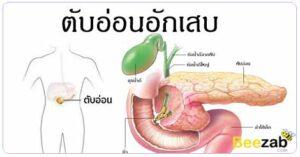 ตับอ่อนอักเสบ โรคระบบทางเดินอาหาร โรคไม่ติดต่อ